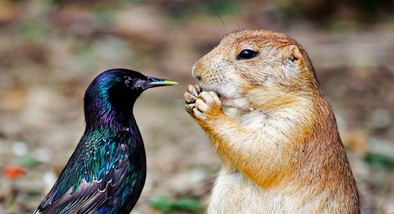 鳥とプレーリードッグの2ショットが可愛い!