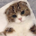 Hinalifeltさんの羊毛フェルトで作った猫がリアル過ぎる!